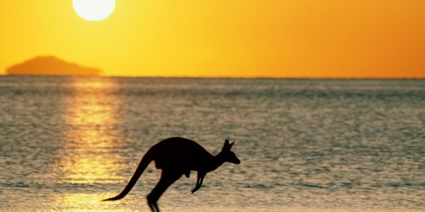 taking joey home australia wallpaper e