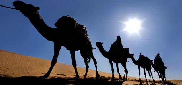 Africa Morocco  camels e