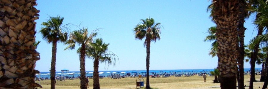 larnaca travelfree e