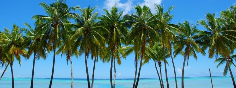 cyprus palms