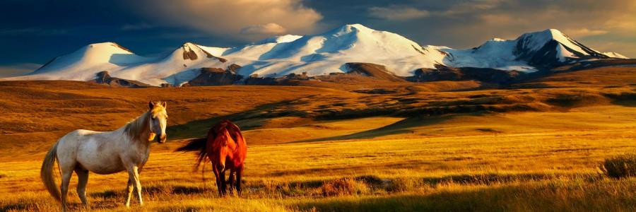 mongolia header