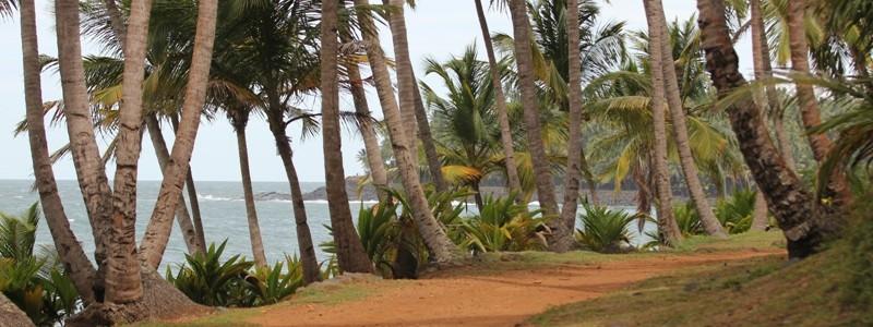 French Guiana xl