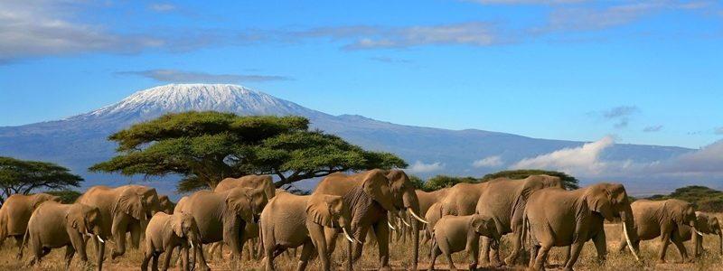 Tanzania xl e