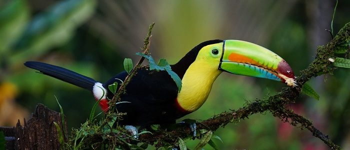Costa Rica   Pixabay sumažintas