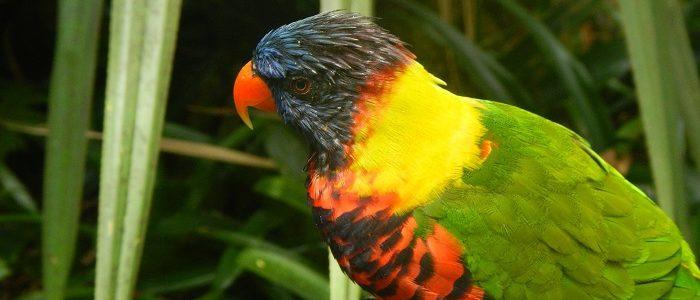 guadeloupe bird-2100541_1920