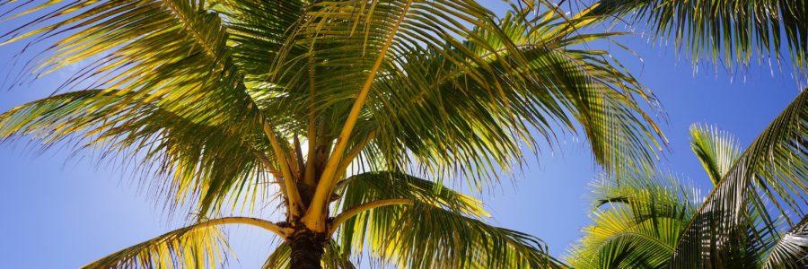 palms-2265922_1920