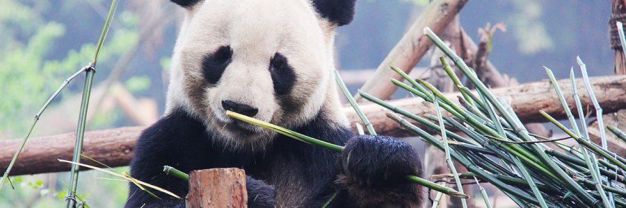 panda_black-and-white-1711001_1280