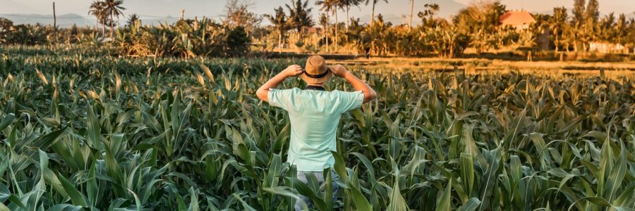 BALI_agriculture-asia-1832328