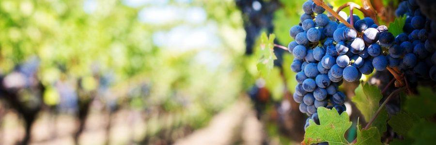 grapes-wine_553463_1280