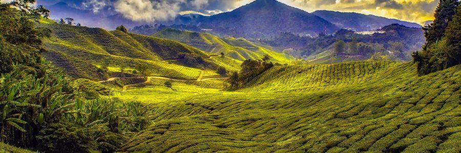 malaysia-1864676_1280