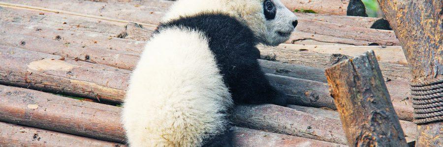 china_black-and-white-1711000_1280