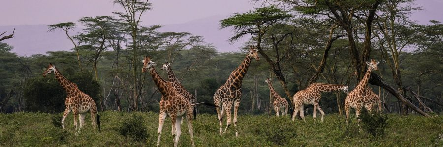 kenya-2685352_1280