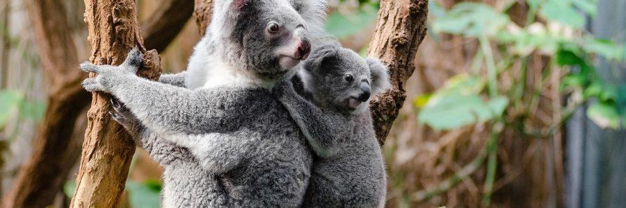 australia-1259681_1280