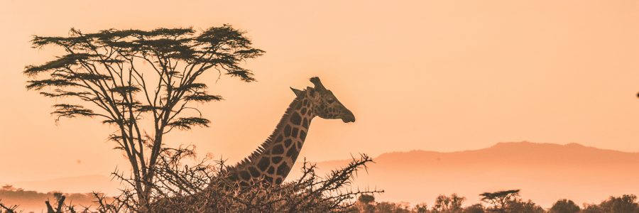 kenya-631426-unsplash