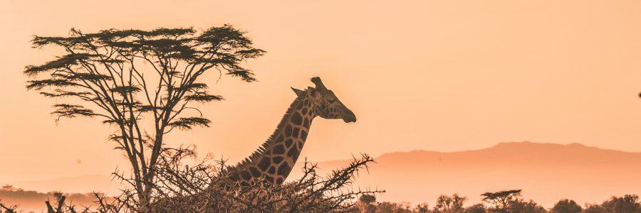 kenya-631426-unsplash