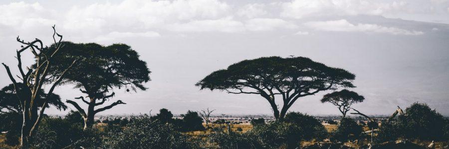 kenya_pexels-photo-861339