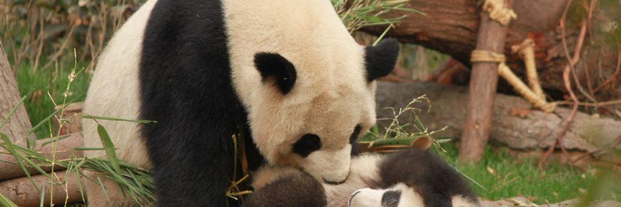 China_animal-animal-photography-1661535