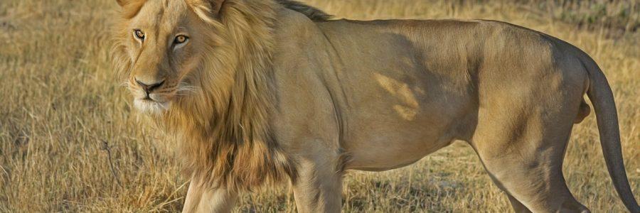 south africa-animal-botswana-47036