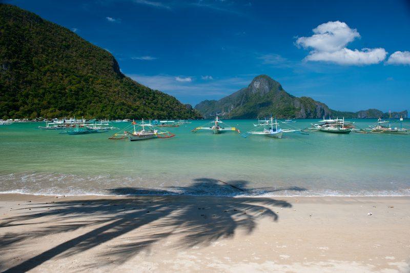 Philippines_tree-3687964_1280