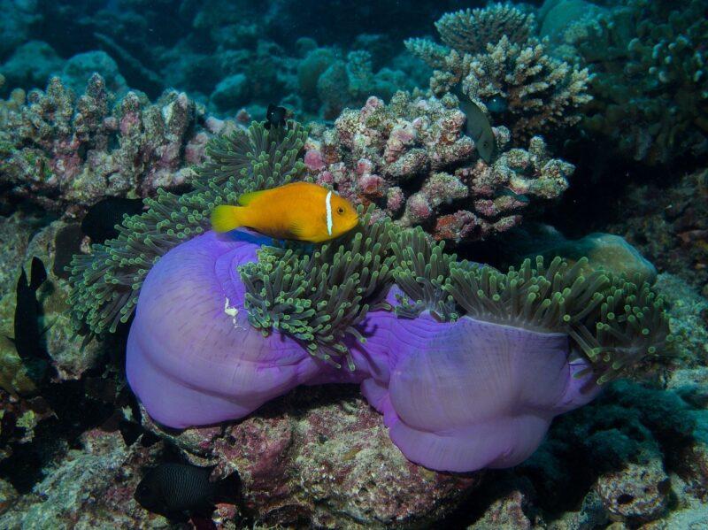 underwater 1915462 1280 e1597919243945